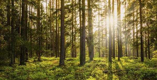 Bioolja - Klimatsmarta produkter